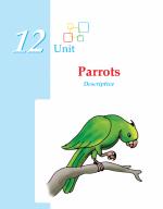 Grade 3 Descriptive Essay Parrots