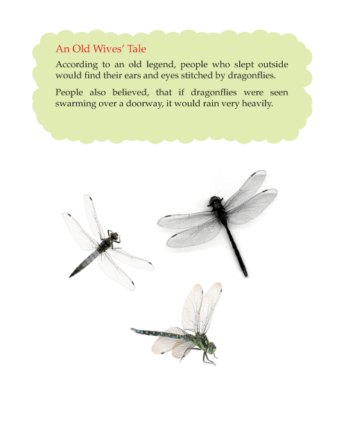 Writing skill - grade 5 - insects  (8)